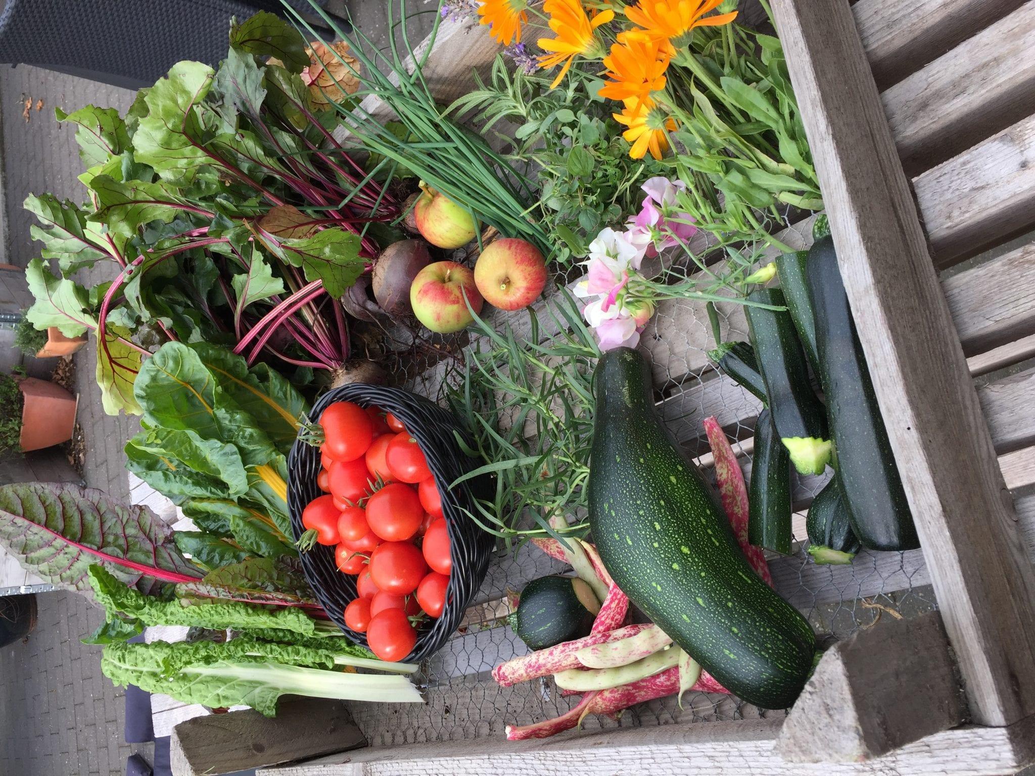 september grøntsager