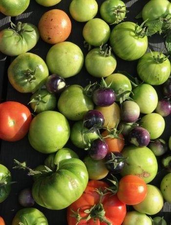 Relish af grønne tomater