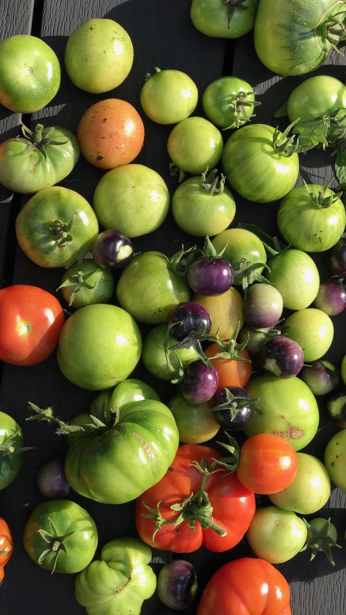 Relish af grønne tomater - Stop madspild