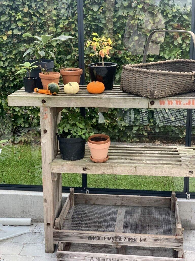 IMG 2351 e1570794081874 Skøn efterårssalat med grønkål, pære og estragon