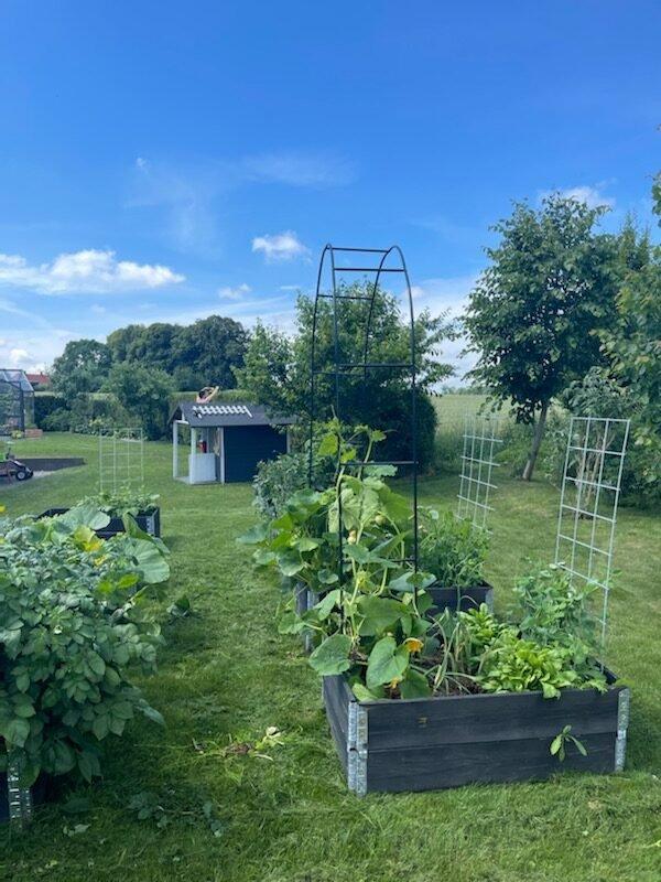 Grøntsager i haven