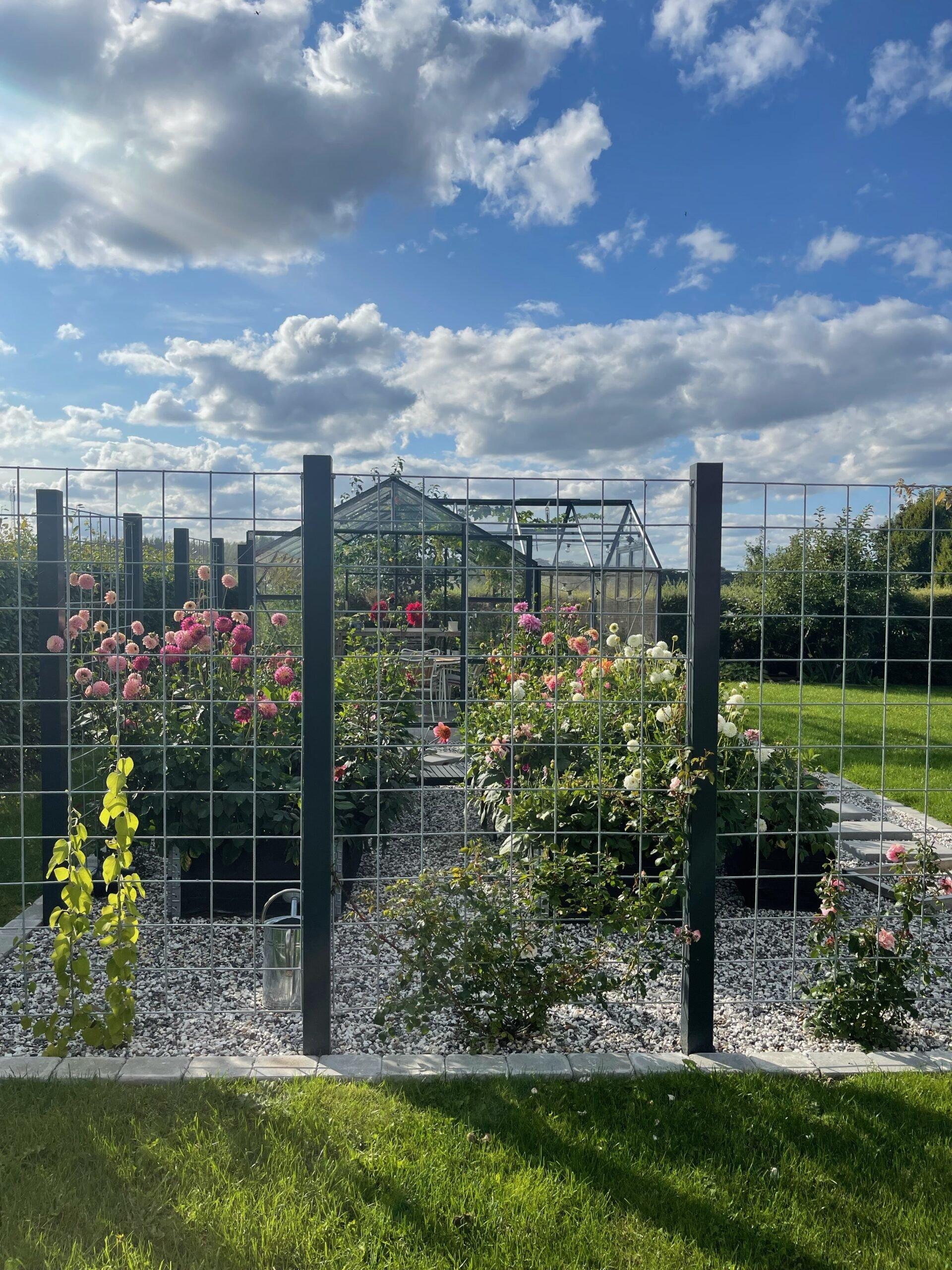 Daliha i haven