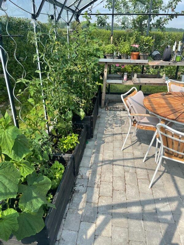Tomatplanterne i drivhus rotated Haven 2021 - Anbefalinger og nye sorter