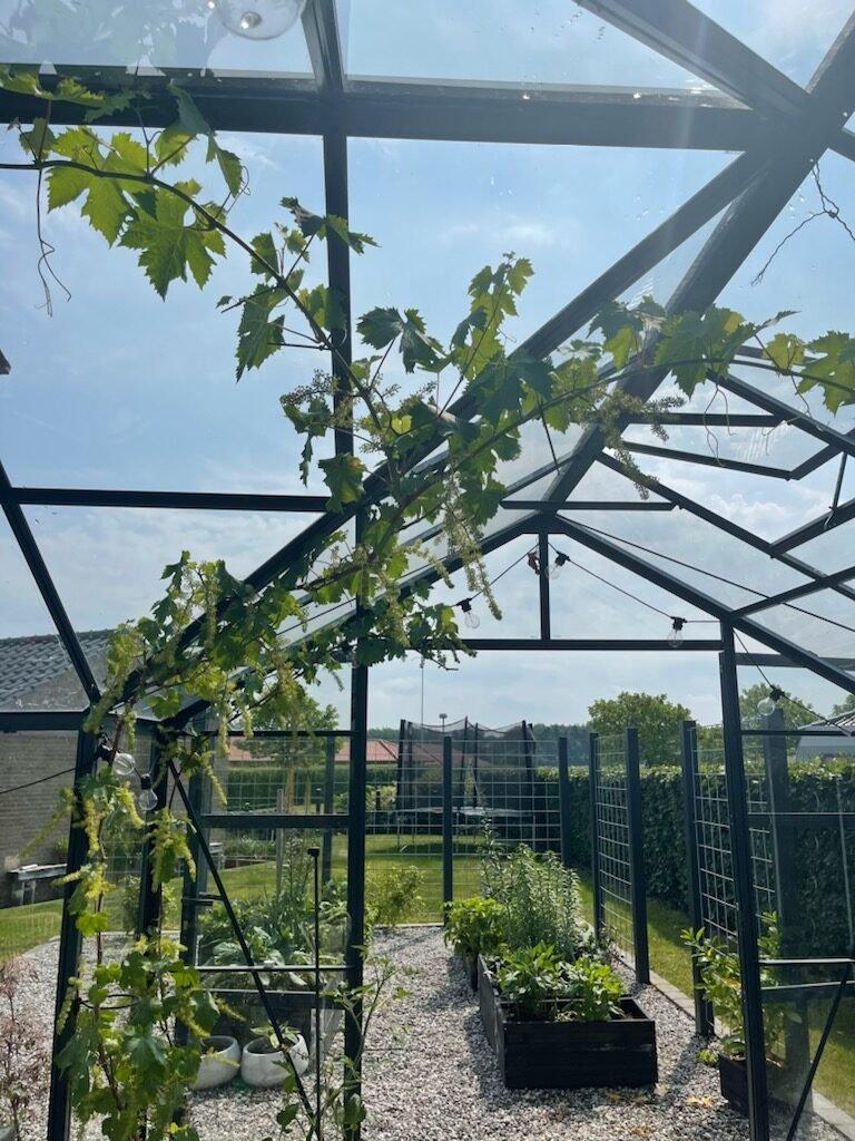 drivhus forår rotated Haven 2021 - Anbefalinger og nye sorter